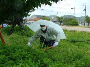 桜の清掃活動