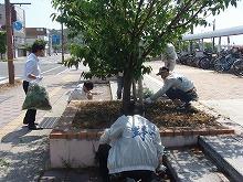 桜並木の清掃活動