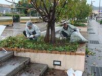 桜並木の清掃活動(第2回)