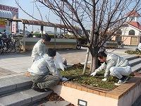 桜並木の清掃活動(第3回)