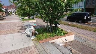桜並木の清掃活動(第1回)
